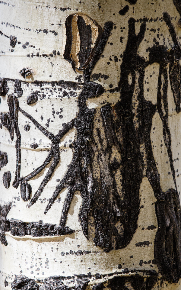 J -  Aspen Detail