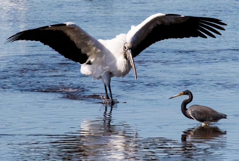 M -  DingDarling Stork w/Gar fish