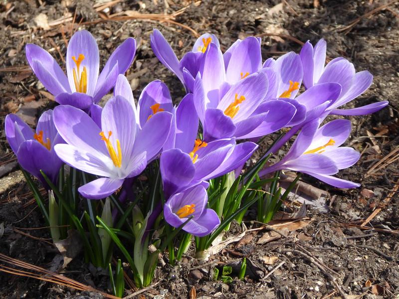 W - Spring arrives