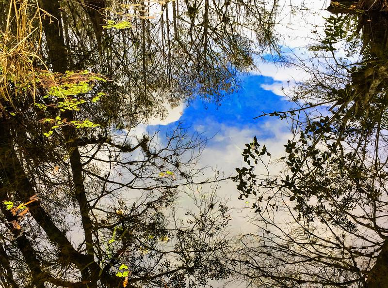 M - Six Mile Cypress Reflection