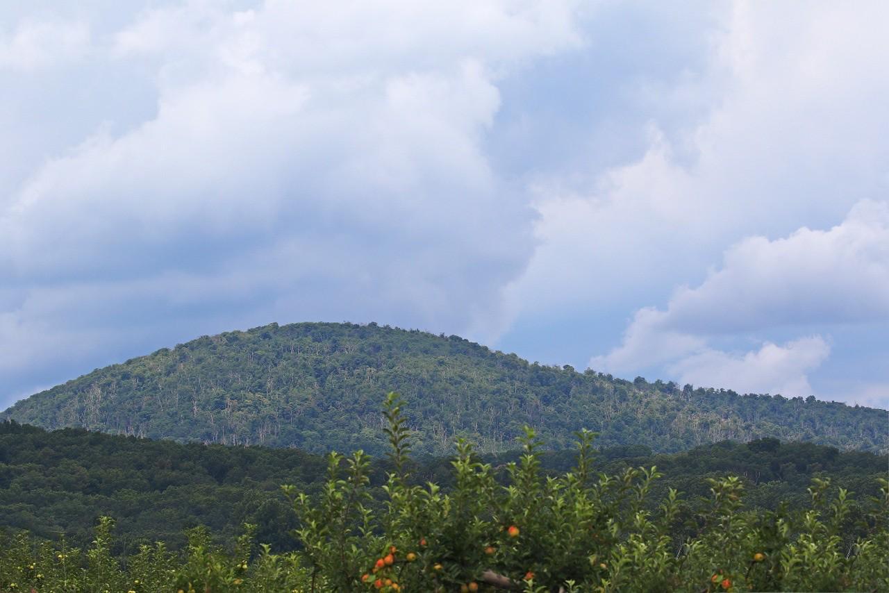 B - Catoctin Mountain