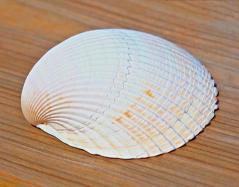 B - Shell