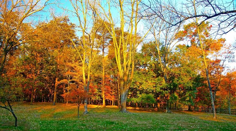 B - Fall in the Backyard, 2015