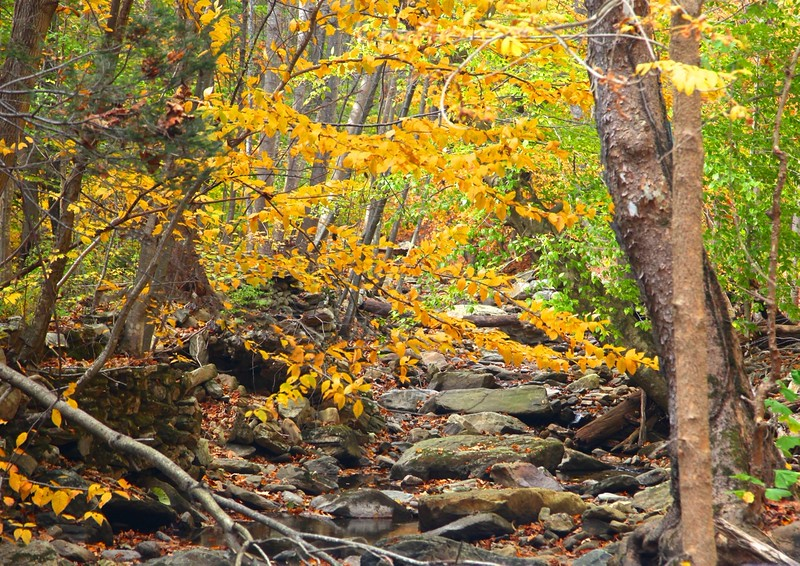 B - Little Hunting Creek