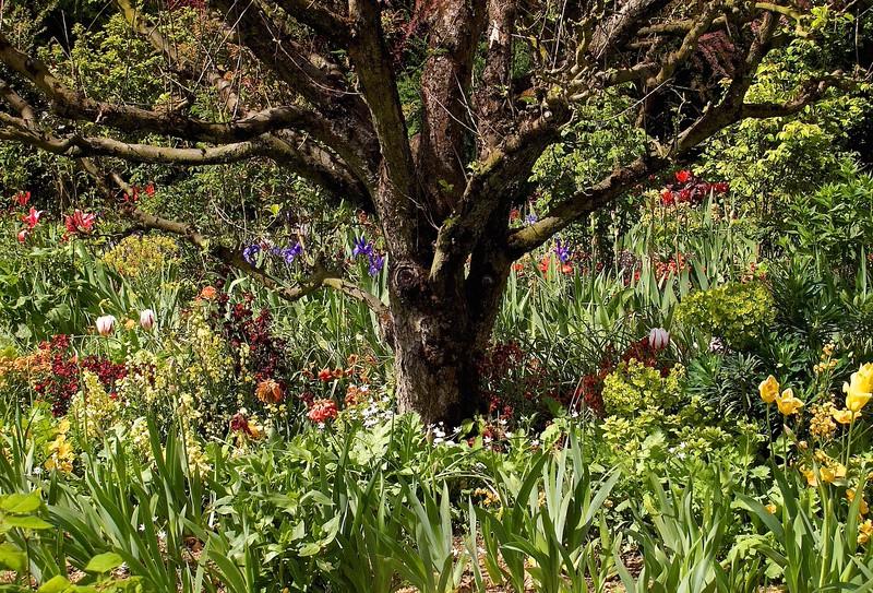 I - Monet's garden, Geverny (1)