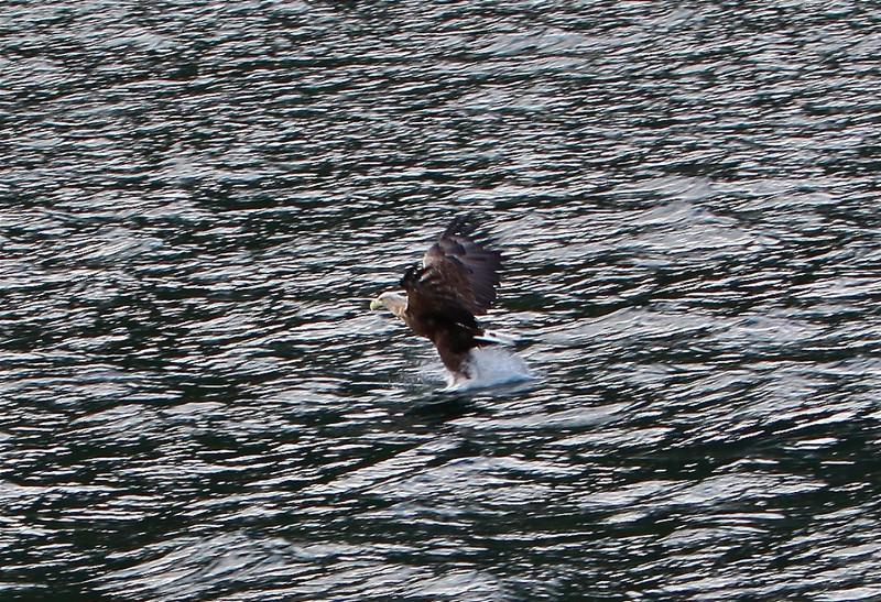 B - Sea Eagle #3