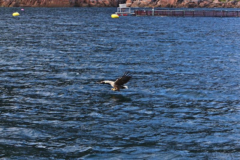 B -  Sea Eagle #2