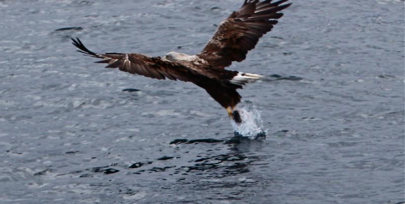 B - Sea Eagle #4