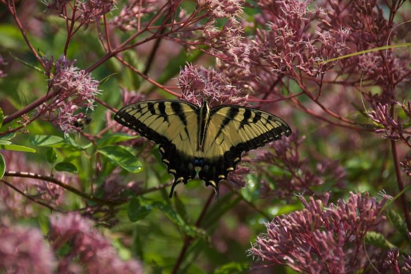 I - Ginter Botanical Gardens, Richmond