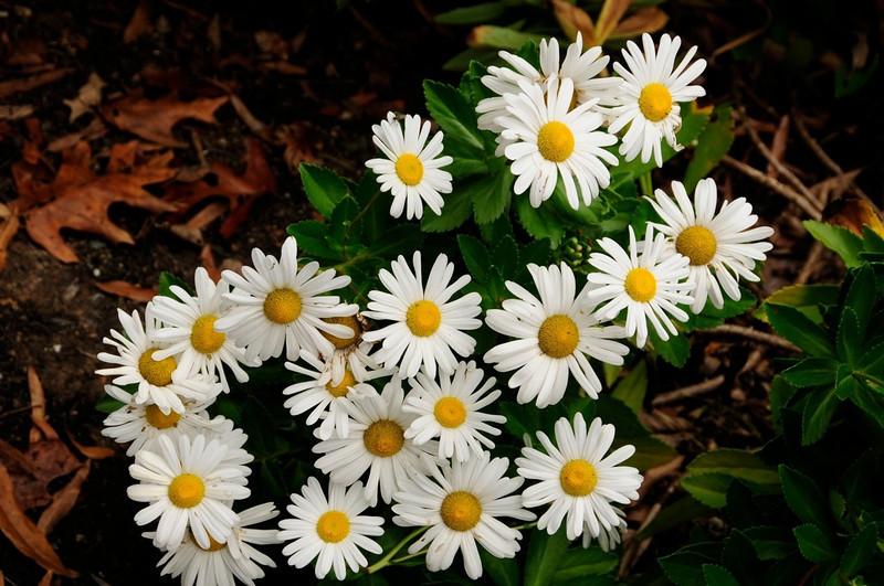 W - Spring Flowers