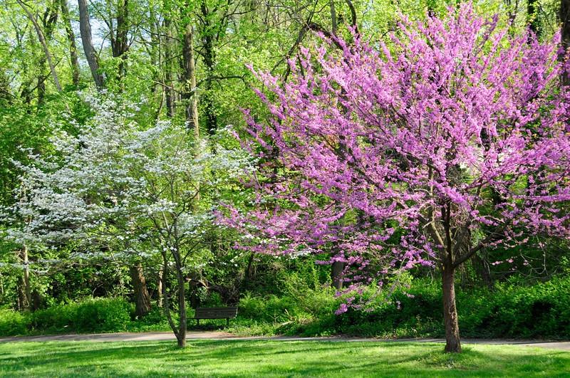W - Spring Blossoms
