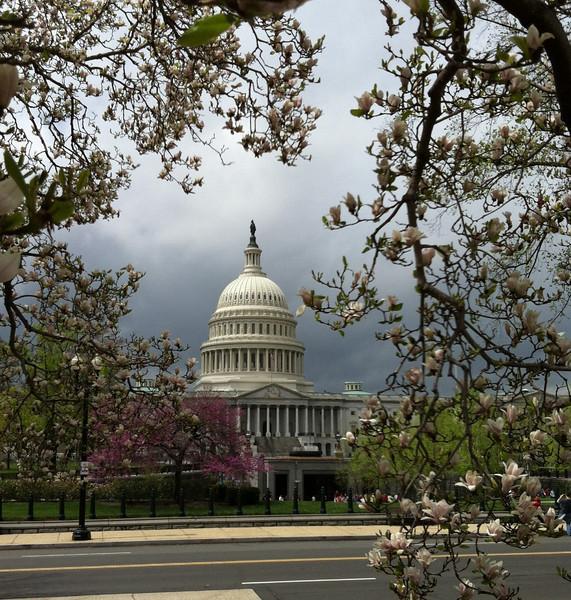 I - Capitol in spring