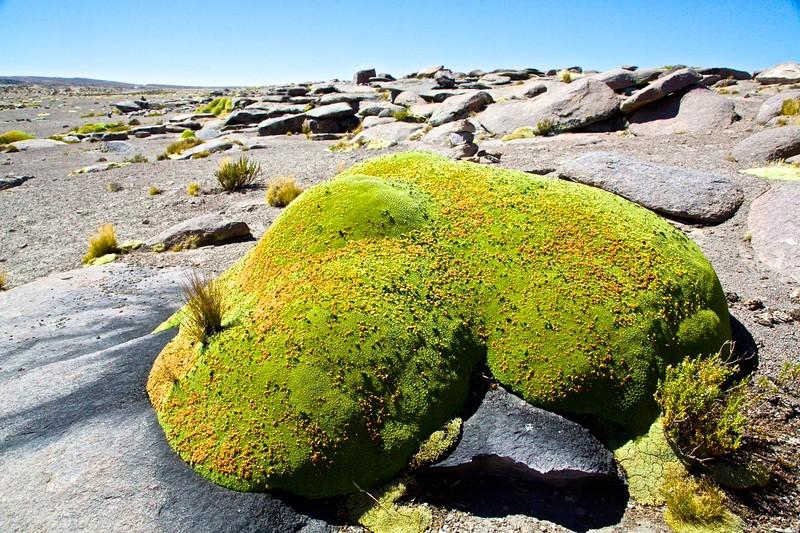 M - High Altitude Blob, Peru