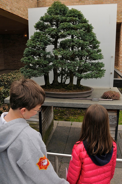 Bonsai forest at Chicago Botanic Gardens