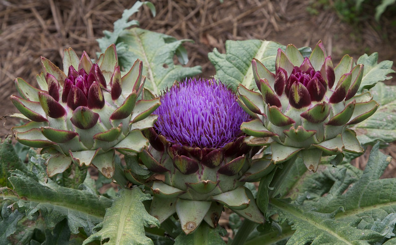 M - George Washington's Artichokes