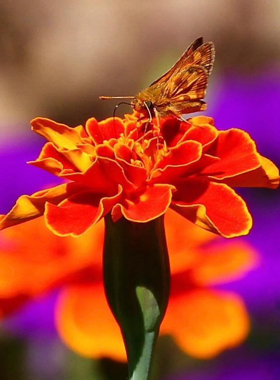 B - Nectar gathering