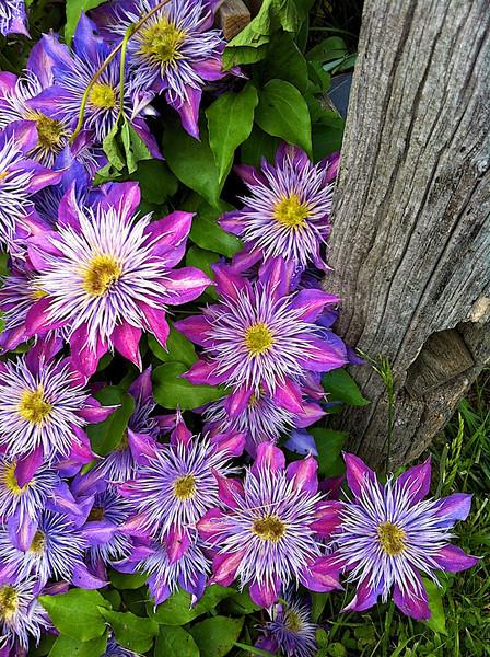 I - Willis garden flowers