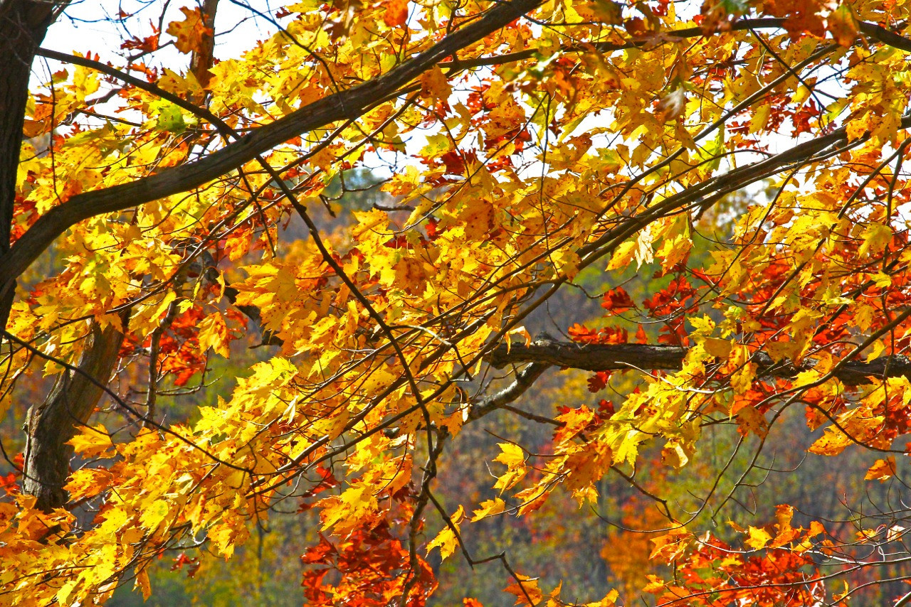 B - Fall leaves at Deep Creek Lake