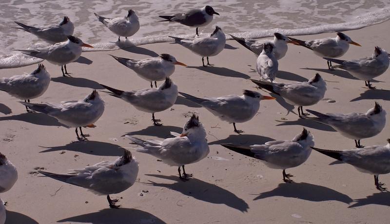 I - Drying Wings-Ana Maria Island