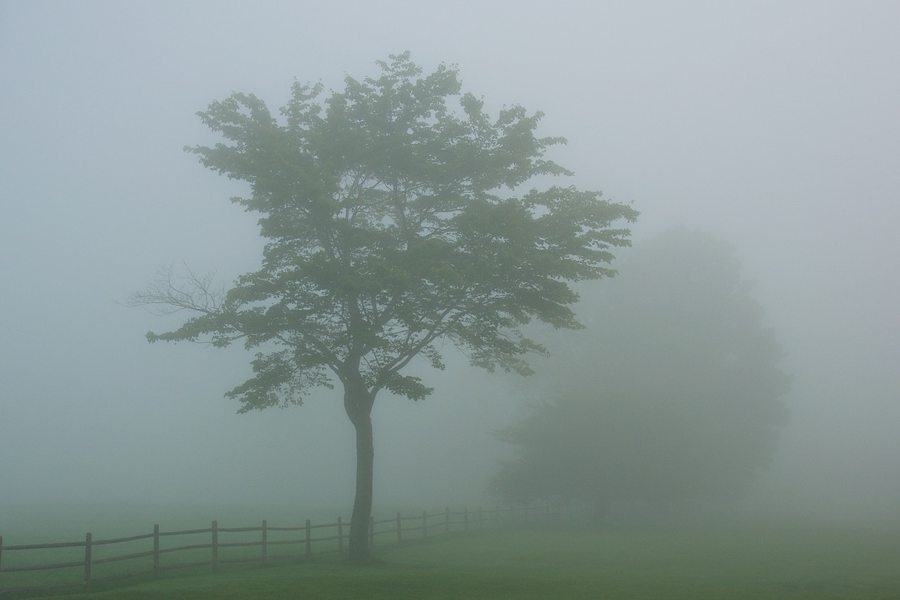 I - Morning fog at Stonybrook