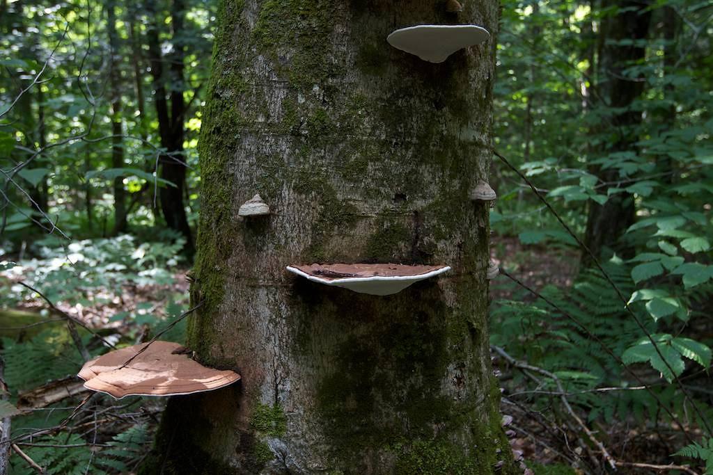 M - Inside Weissner Woods