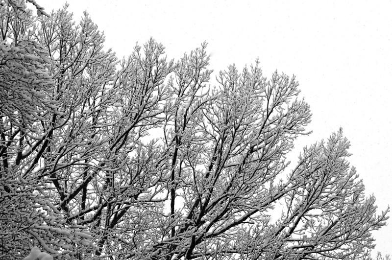 W - Wet Snow, Gray Sky