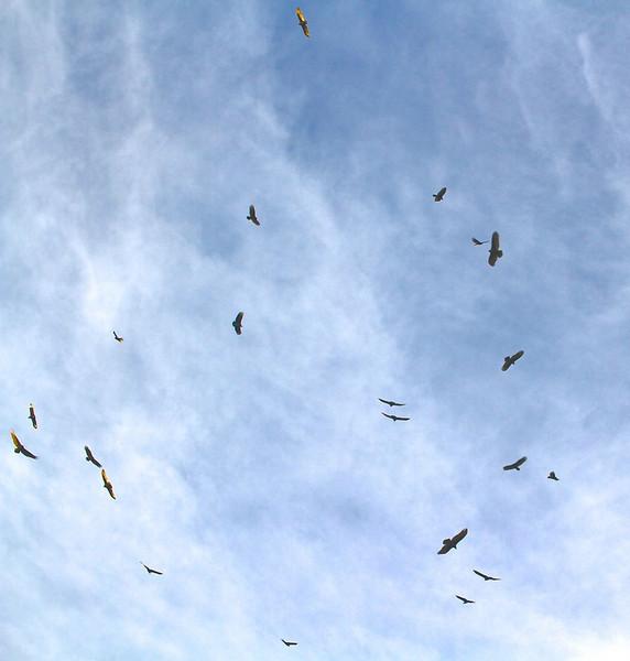 "B - A ""wake of buzzards"""