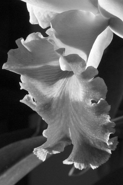 J - Orchid detail