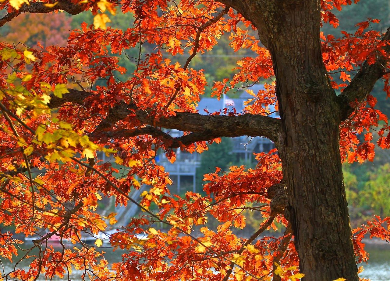 B - Light through the leaves