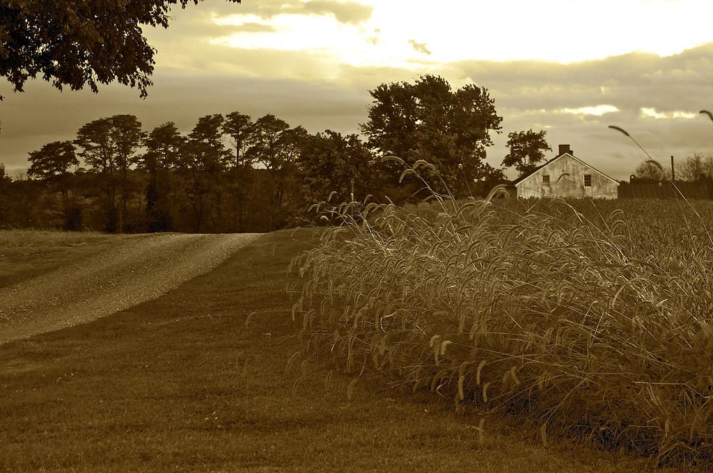 Best Farm (Frederick Sept 2009) Canon Rebel XSi 50mm f/4.4 1/25 ISO 100