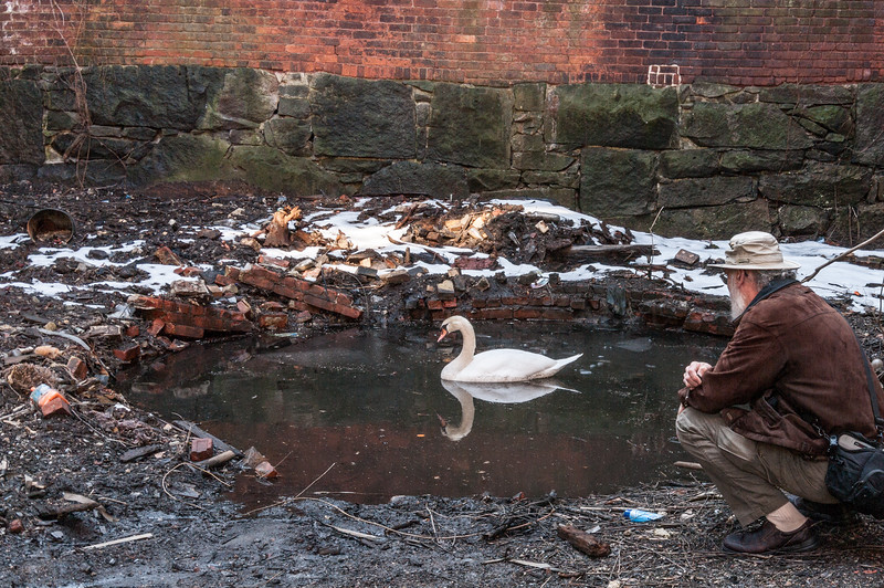 Me observing the Swan in squalor. Old factory setting.Found -