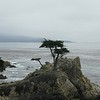 California, 2000. 17 Mile Drive. Lone Cypress.
