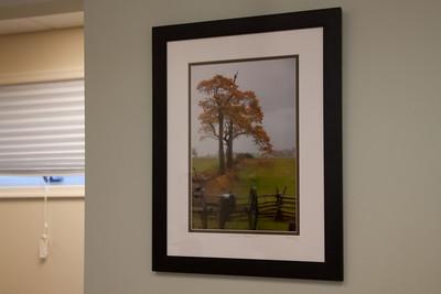 Framed-0924 'Witness Tree - Gettysburg, PA'