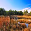 - On Golden Marsh -