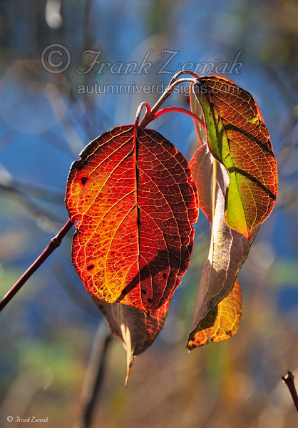 - Copper Leaves #1 -