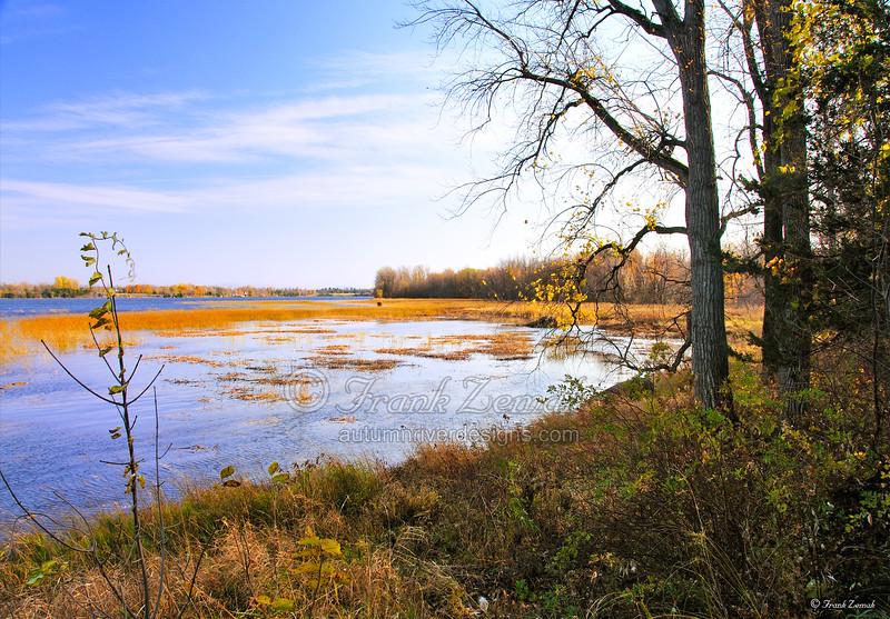 - Vermont Marsh #1 -