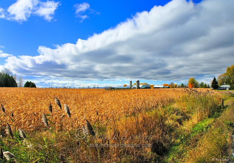 - Vermont Farm #1 -