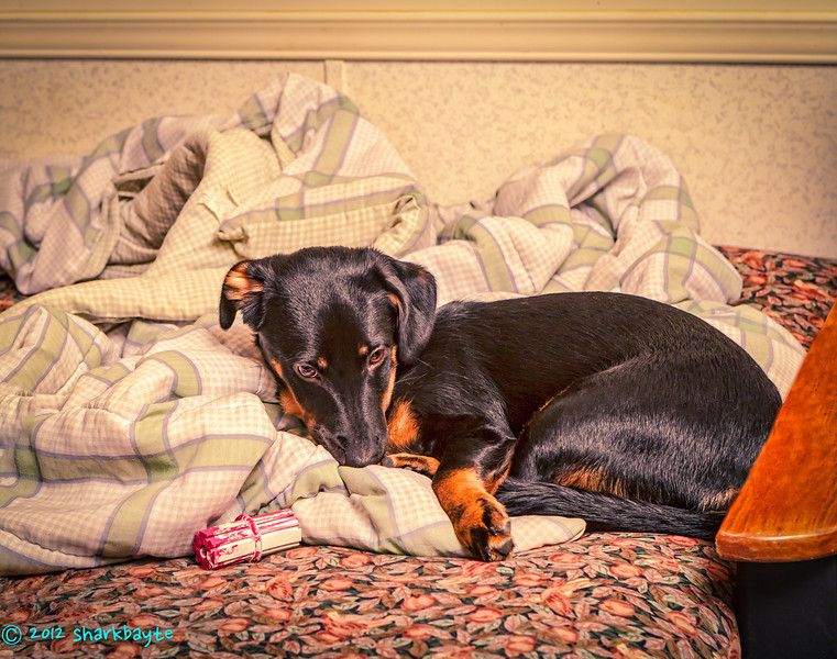 Pre-nap<br /> August 9, 2012-Just a shot of Fräulein, before her nap. I am trying some different types of processing this week. So everything is experimental. (Day 40:365)