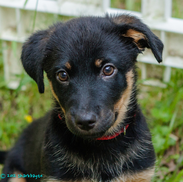 Two months<br /> Fräulein is now two months old. She loves going outside to play.