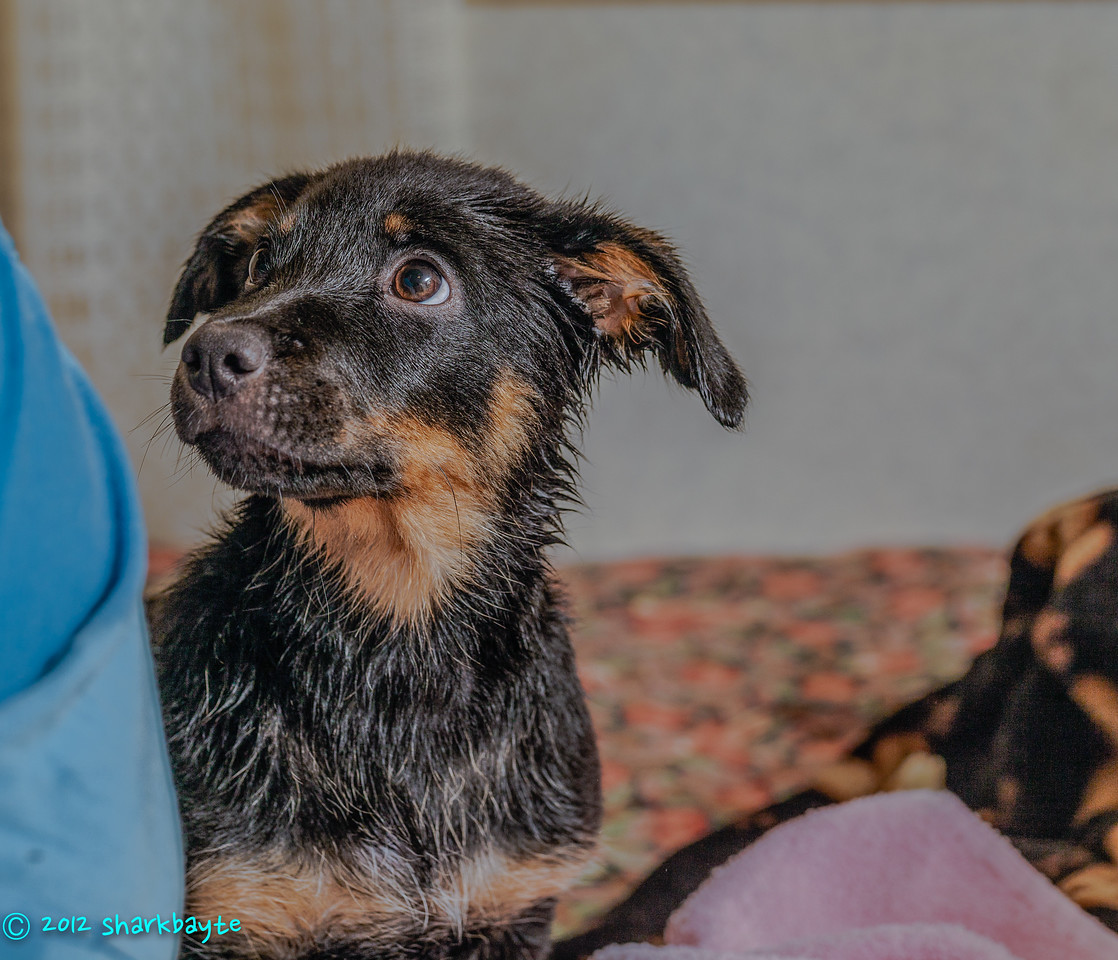 First bath<br /> Fräulein's first bath! Not so stinky now. Well, she never was stinky but once in a while we just have to take a bath.
