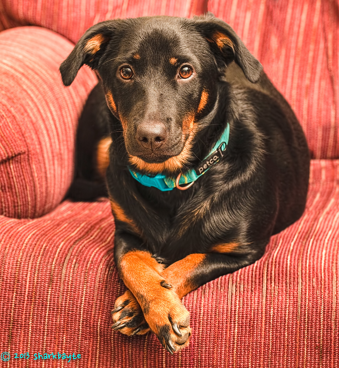 Thankful My Fräulein sitting pretty for her Thanksgiving photo.