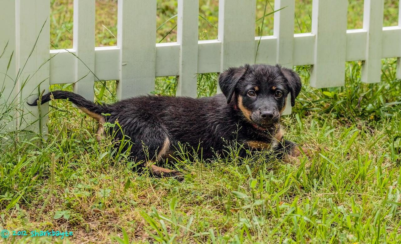 Grass inspector<br /> Fräulein is our grass inspector.