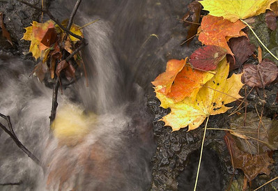 Autumn Splash