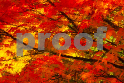 Autumn Color Painting in Camera Renton, Washington