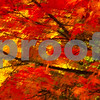 Autumn Color Painting in Camera<br /> Renton, Washington