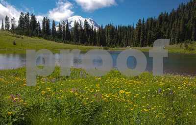 Wildflowers, Lake Tipsoo and Mount Rainier Washington
