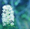 blue and white flower