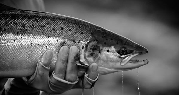flyfishingimages.co.uk