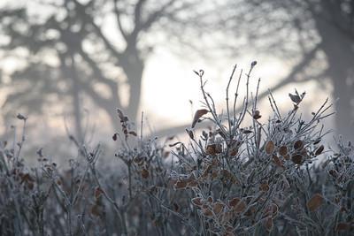 Fog n Frost 13