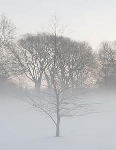 Fog n Frost 05